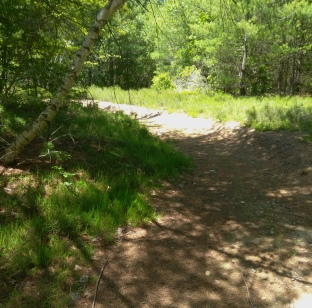 Curving trail at Thompson Pond.