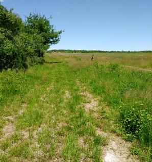 Narrow grass mown hiking trail on the Thompson Pond Trail in Abington.
