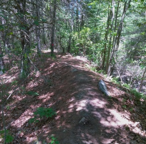 The hiking trail is directed along this narrow ridge in the forest.