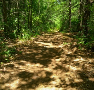 The hiking trail rejoins an older cart path near Thompson Pond.