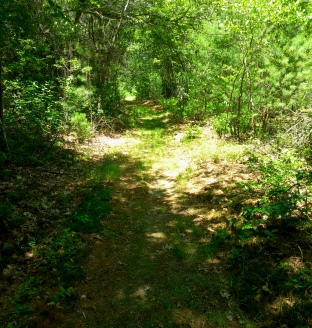 Grassy trail at furthest point of conservation area.