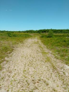 Sandy road alternative hiking trail at Thompson Pond.