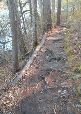 forest material supports a narrow trail