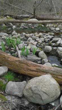 garden like stream