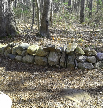 stone wall in rockland town forest