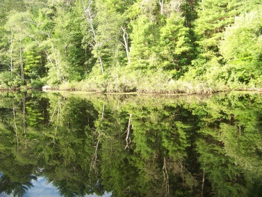 triphammer pond mirrors the sky
