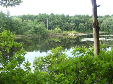 triphammer pond in the summer