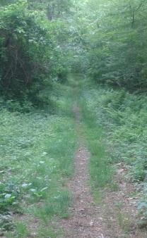 side hill rd. from turkey hill lane