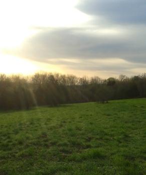 sunlit meadow on Turkey Hill