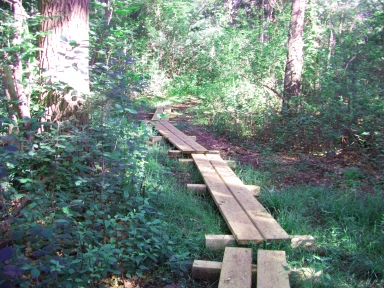 planks on twin ponds trail