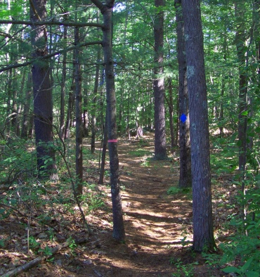 twin ponds trail marked by blue diamonds