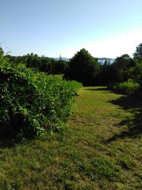 mown lawn hiking trail