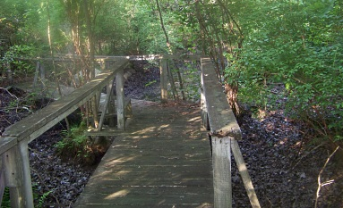 bridge over vernal pond in weir river woods
