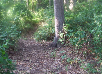 access path in weir river woods