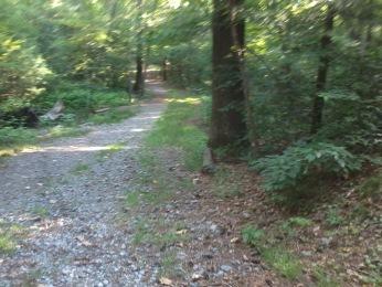 main trail in Wheelwright Park