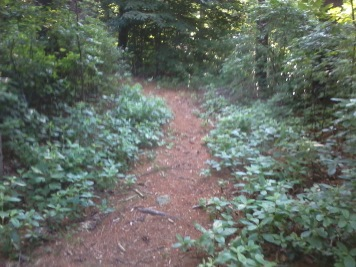 side trail in Wheelwright Park