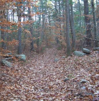 passing through a stone wall on the whitman hanson trail