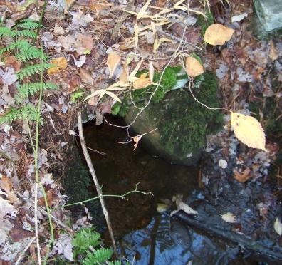small stone culvert on whitman hanson trail