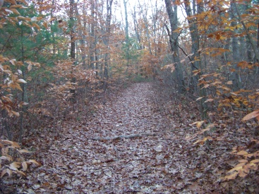 whitman hanson hiking trail is wide pleasant and flat