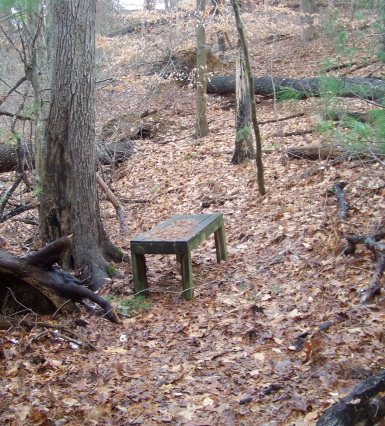 bench at trail end in whortleberry hollow