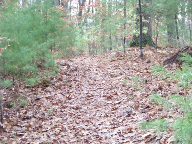 hiking trail through whortleberry hollow in hingham