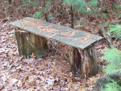 one of the many benches placed in whortleberry hollow in hingham