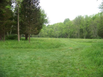 grassy trail divides at open field in willow brook farm