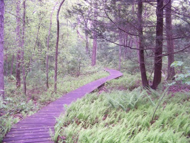 boardwalk hiking trail in willow brook farm in pembroke