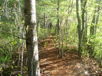 hiking trail continues along the bog at camp wing conservation area