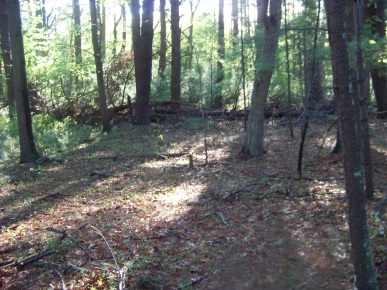clearing at end of the trail in camp wing conservation