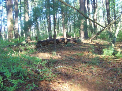 clearing along route 3 in camp wing conservation area in duxbury
