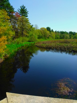 Winnetuxet River in Halifax