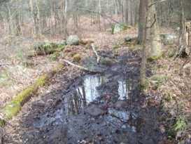 wet hiking trail at holbrook town forest