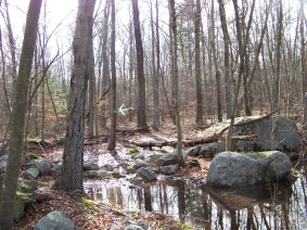 sawyer trail through water