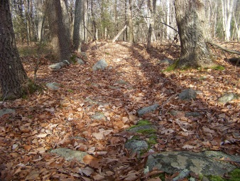 hiking in holbrook town forest