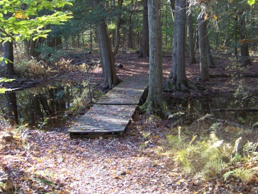 boardwalk over wet area at colby phillips