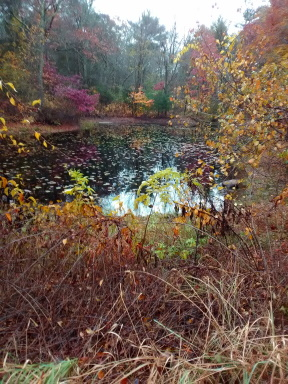 denham pond