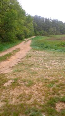 Hiking trail leading into Duxbury Bogs