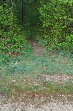One of many side trails leading into the woods at Duxbury Bogs.