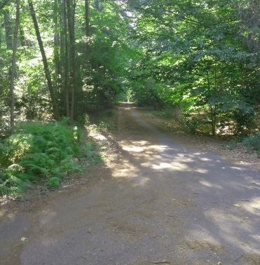 Looking down an older unused portion of the campground at Wompatuck State Park at trail marker S17.