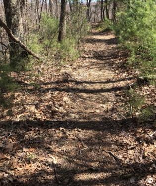 stump brook trail widens