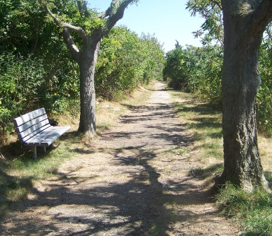 Bench along side the trail at Bumpkin Island.