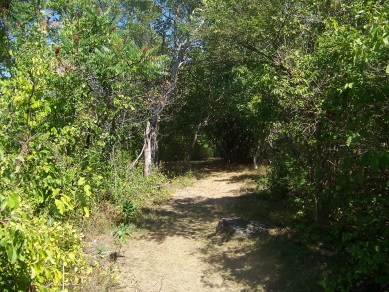 The hiking trail that takes you through the camping area on Bumpkin Island.