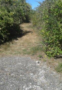 Beginning of the trail that circles Bumpkin Island.