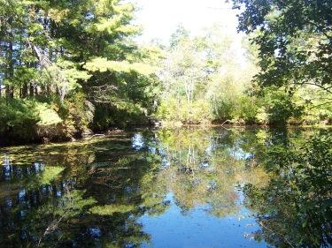 smaller peaceful pond of indian reservoir