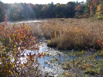 clark bog loop trail pond