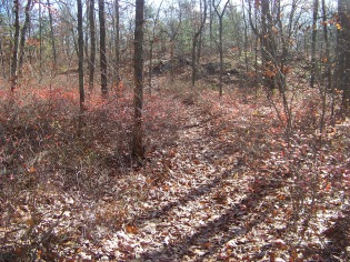 short cut paths other side at cranberry pond