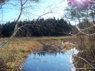 sphagnum bog at cranberry pond conservation