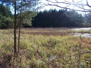 quaking bog at cranberry pond conservation