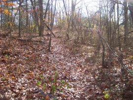 short cut on trail at cranberry pond